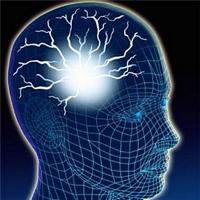 hjerne04w0200